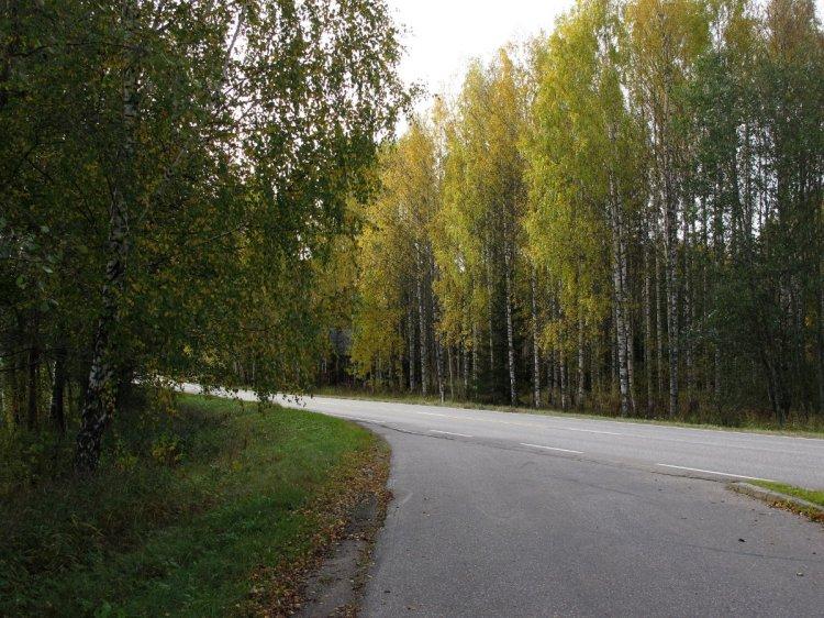 Вдоль дорог стоят желтеющие деревья