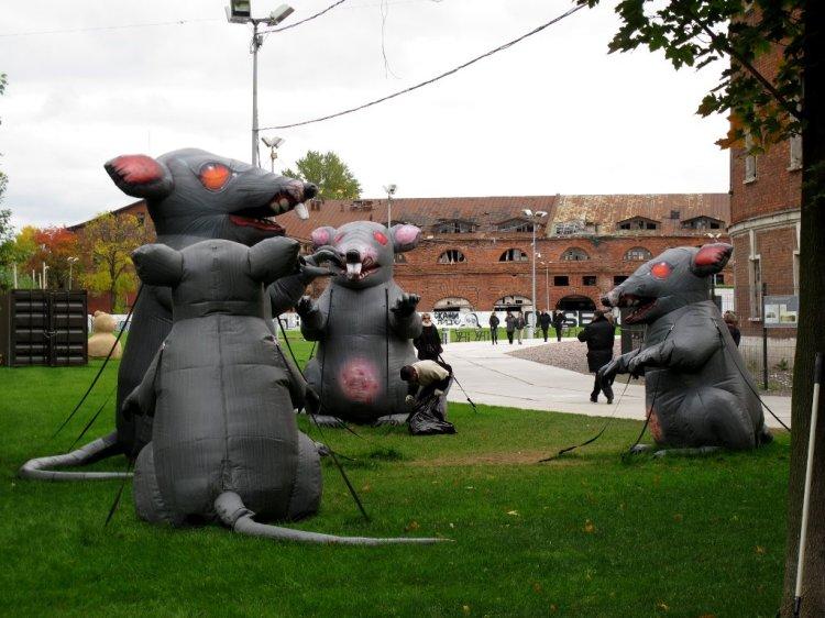 Крысы и уборка