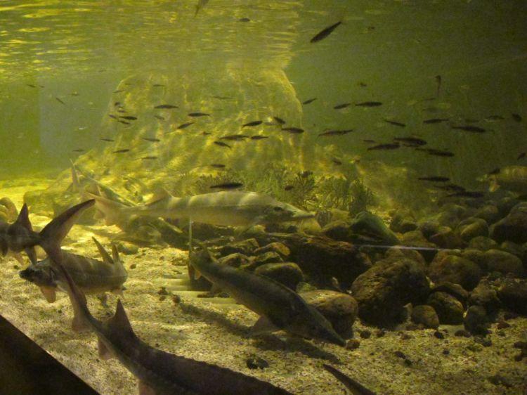 Рыбы в огромном аквариуме