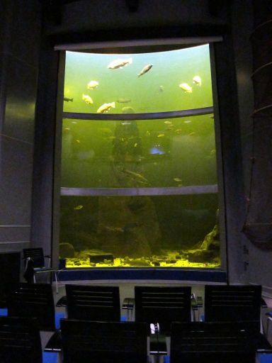 Огромный лекторий возле аквариума