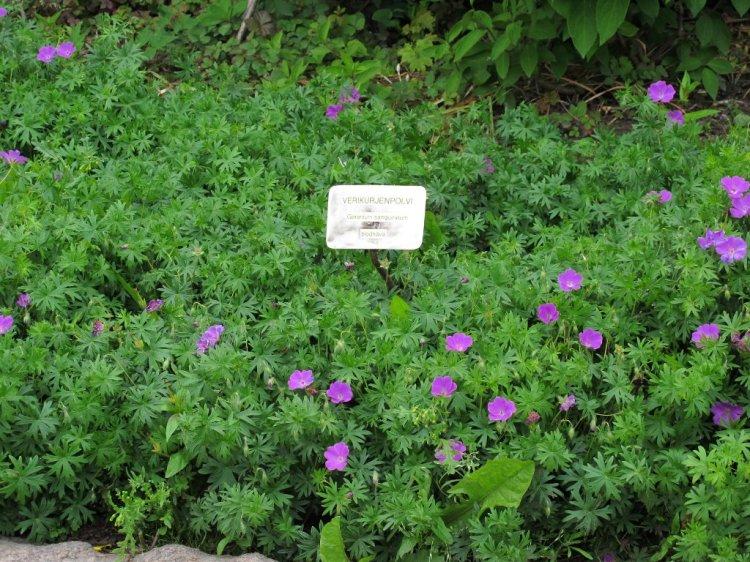 Прямо Ботанический сад