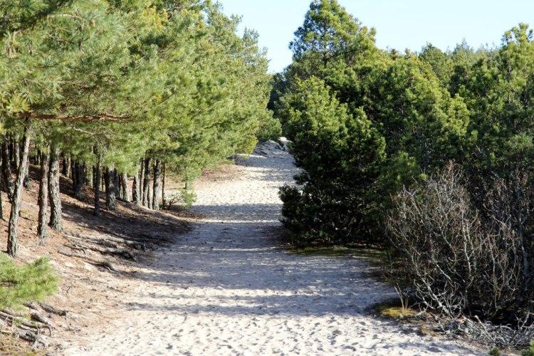 Песчаная тропа