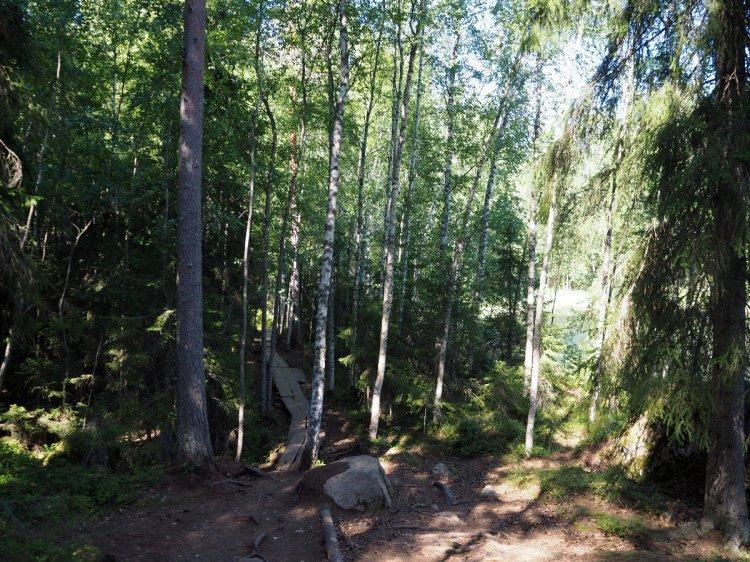 Доски по болоту
